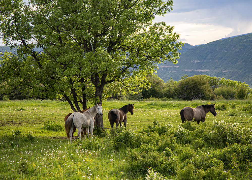 Evolution of Roaring Fork Valley Land Engel & Völkers Real Estate