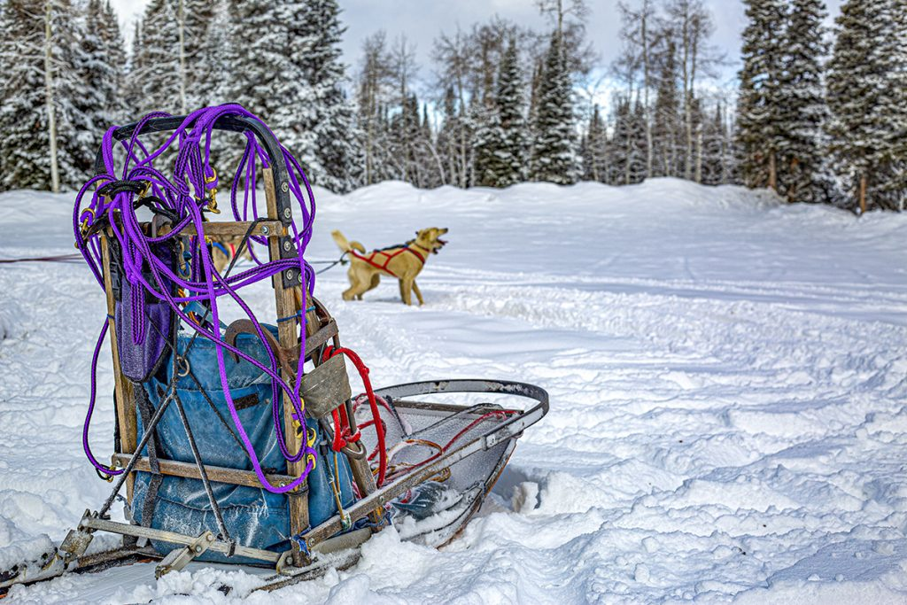 Dog Sled Details