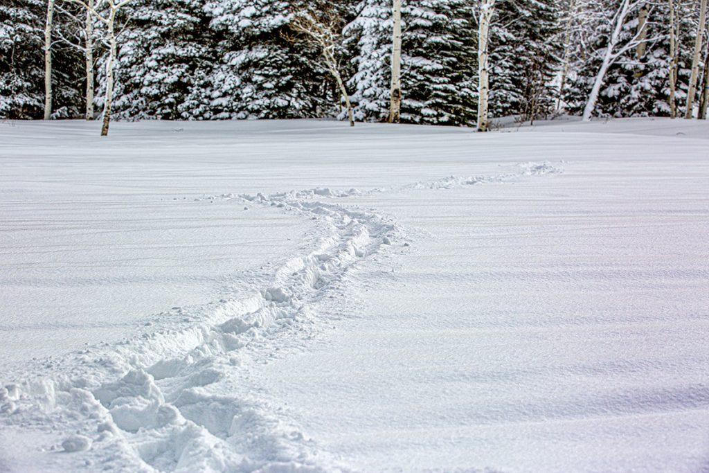 foot prints through fresh snow