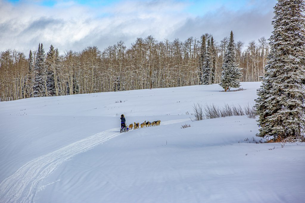 mushing is a Colorado lifestyle