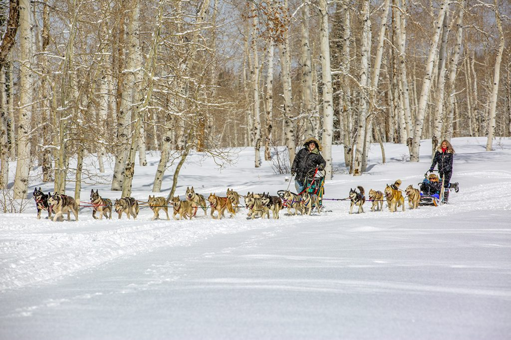 two dog sled teams in Buford Colorado