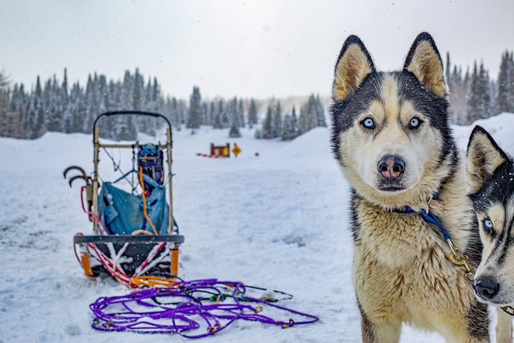 dog sledding as a Colorado lifestyle