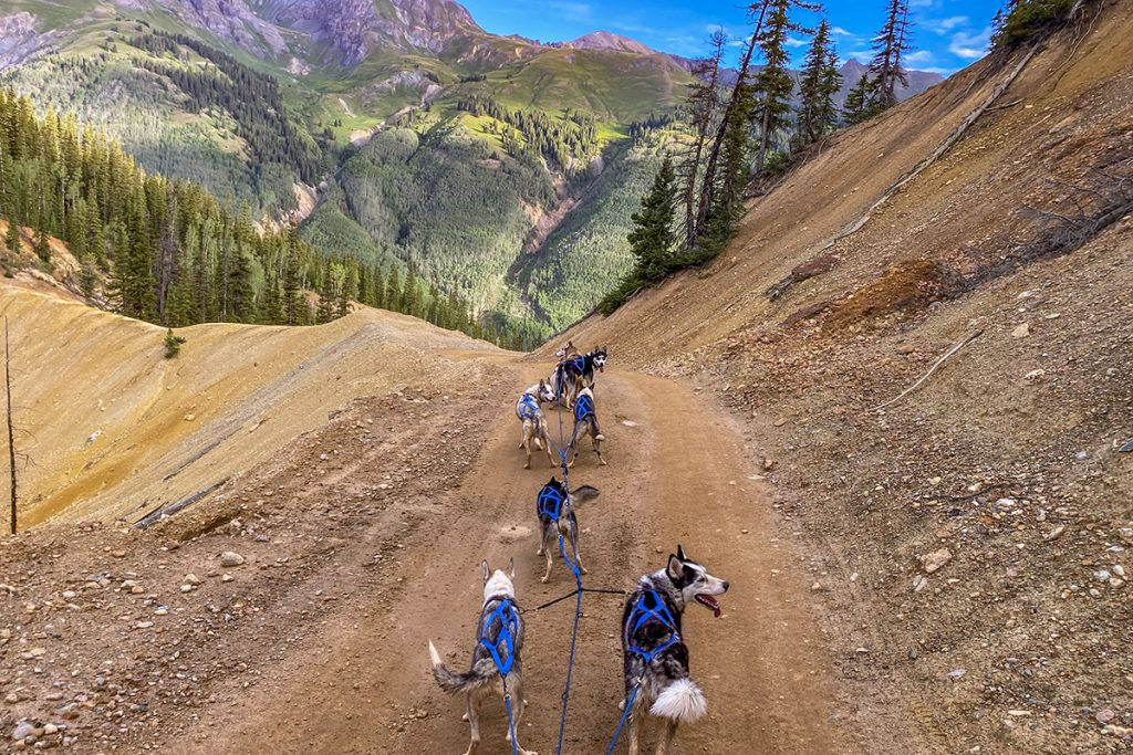 Dog Sled Training Ouray Colorado