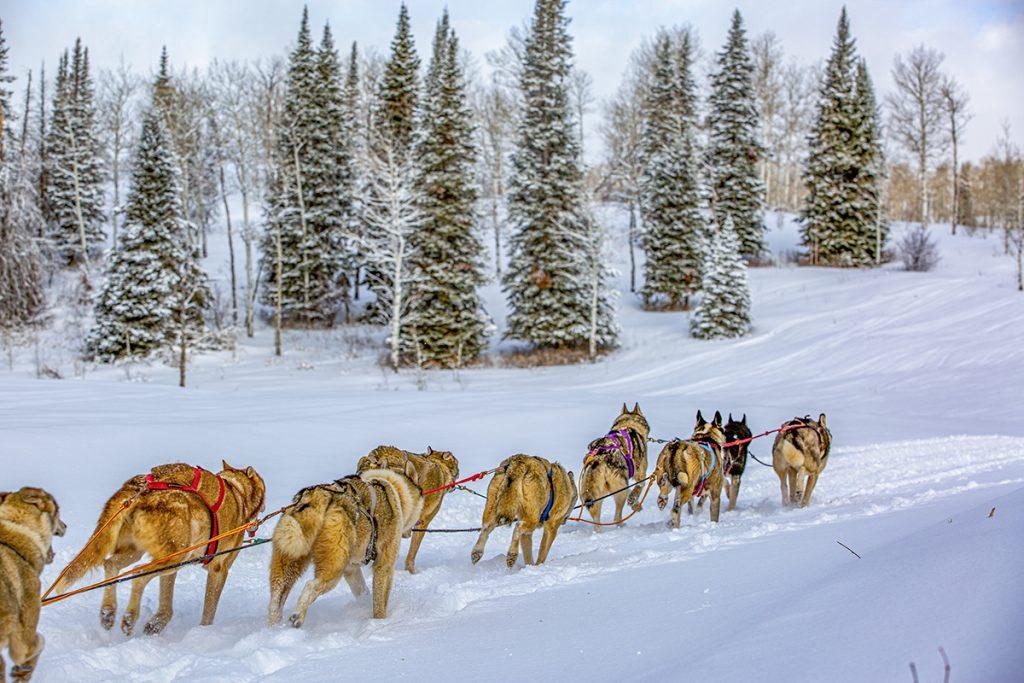 dog sledding Colorado lifestyle