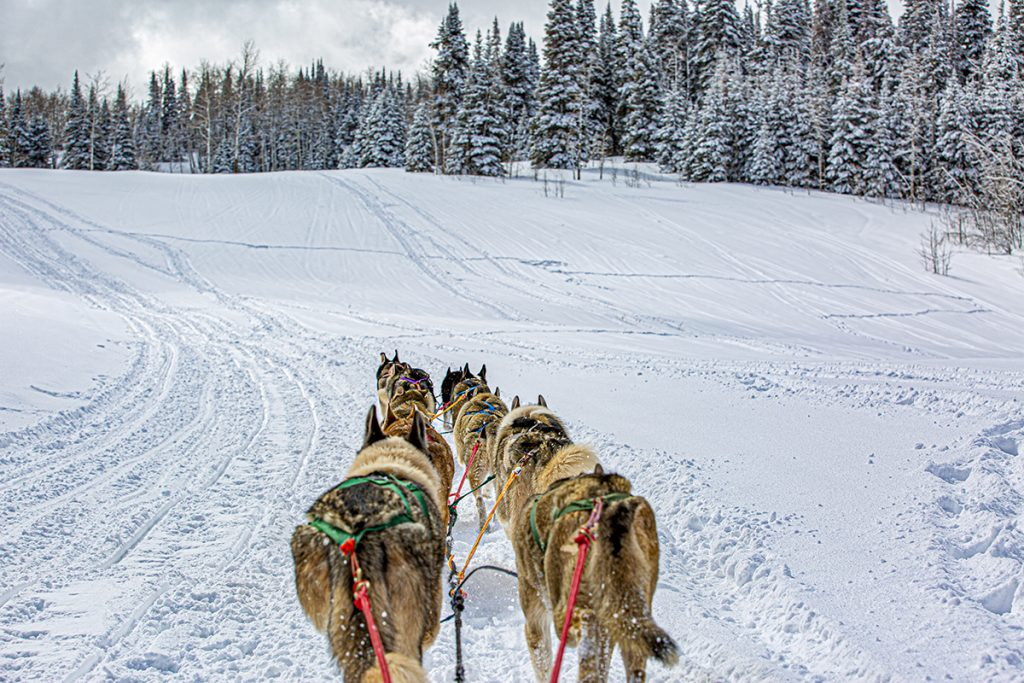 a view from the dog sled in action